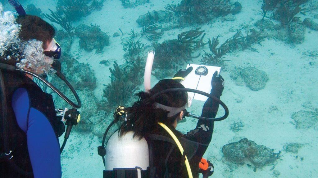 Spécialités : Navigation sous-marine